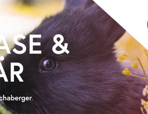 Hase und Bär – Gastbeitrag von Petra Schaberger