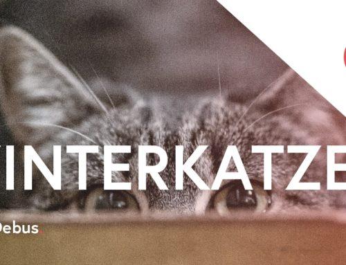 Winterkatzen – Gastbeitrag von Bernd Debus